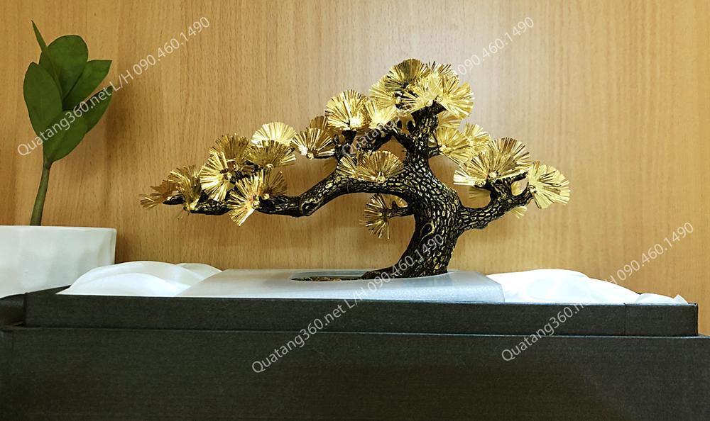cây tùng dát vàng